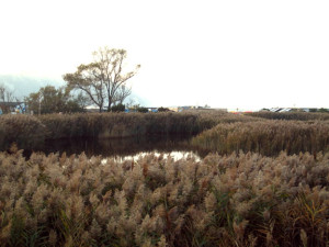 Ancona Portonovo Pond